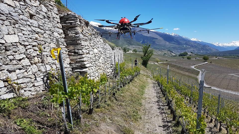 Sprühdrohne über Weinreben (Photo: AgroFly SA)